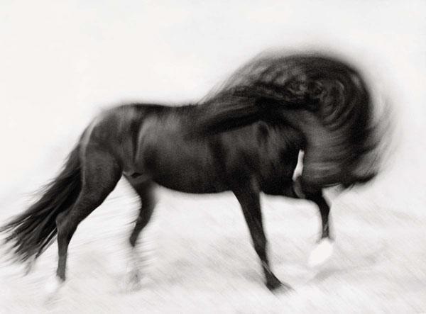 PferdeAugenBlicke von Ruth Marcus, Ein Beitrag von foto.kunst.kultur