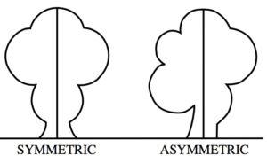 """Asymmetric (PSF)"" von Pearson Scott Foresman"