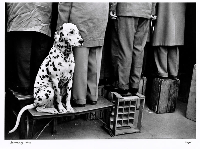 1956_WalterVogel_Hund