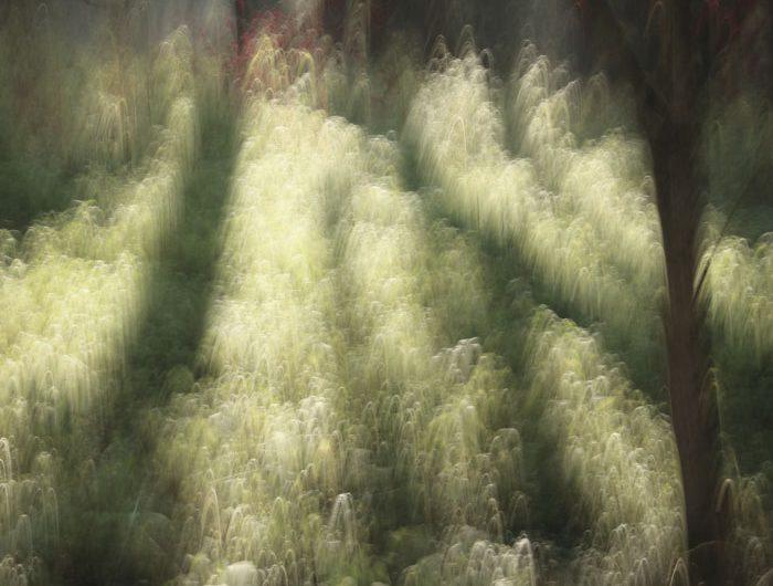 foto.kolleg, foto.kunst.kultur, Christa Schiffner