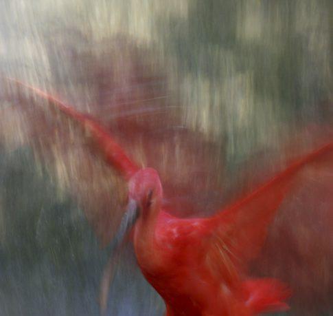 foto.kolleg, foto.kunst.kultur, Bildbesprechung, Helga Partikel, Christa Schiffner