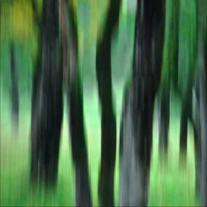 Faszination Natur, foto.kunst.kultur, helga partikel, fotokurs, onlinekurs