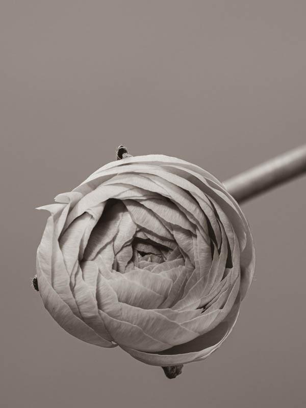 foto-kunst-kultur, Schwarzweiß-Kurs, Stefanie Erdrich